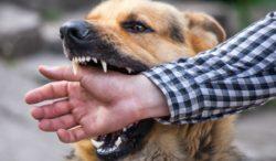 que hacer si tu perro muerde a una persona