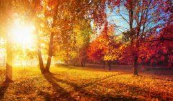 descubre todo lo que tiene para ti el otoño