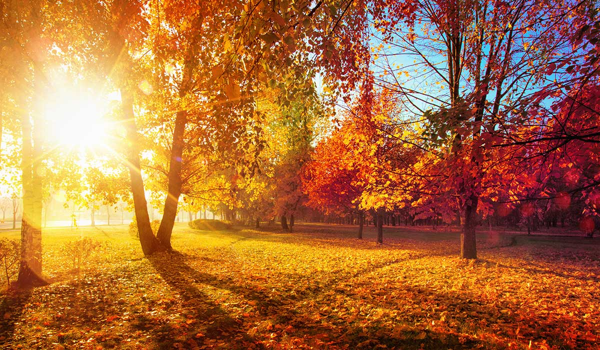 21 maneras extrañas en que el mundo cambia en otoño