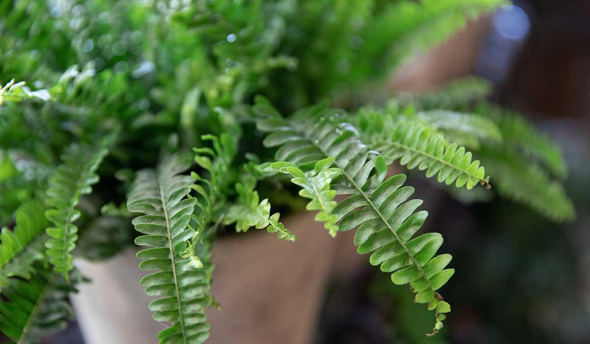 plantas que purifican tu hogar