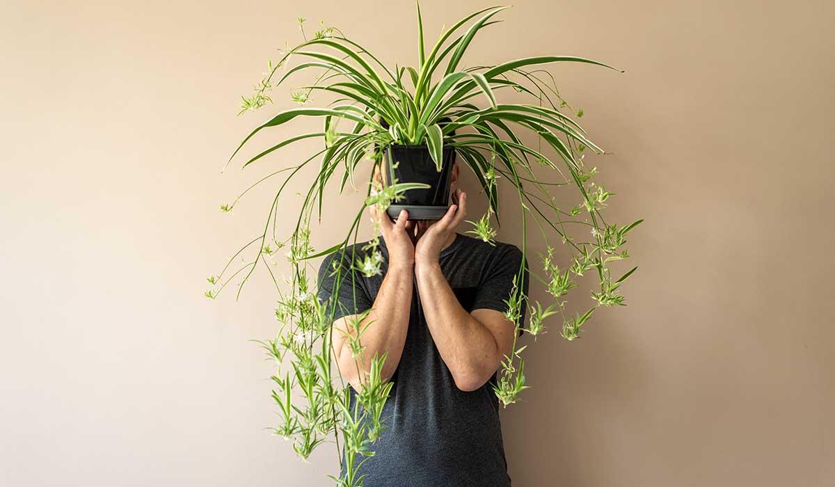 plantas para limpiar tu hogar