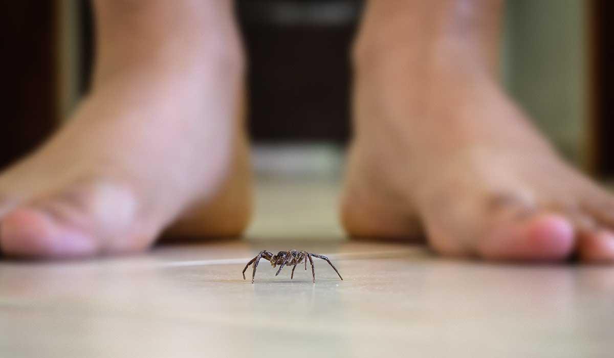 por esta razón debes evitar matar arañas en tu casa