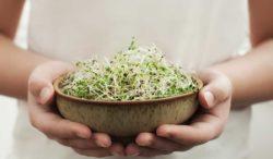 disfruta estas recetas de germinados
