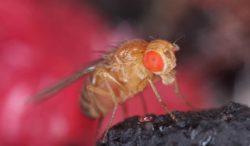 trampas hechas en casa para moscas de la fruta
