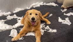 problemas de entrenamiento que puedes tener con tu perro