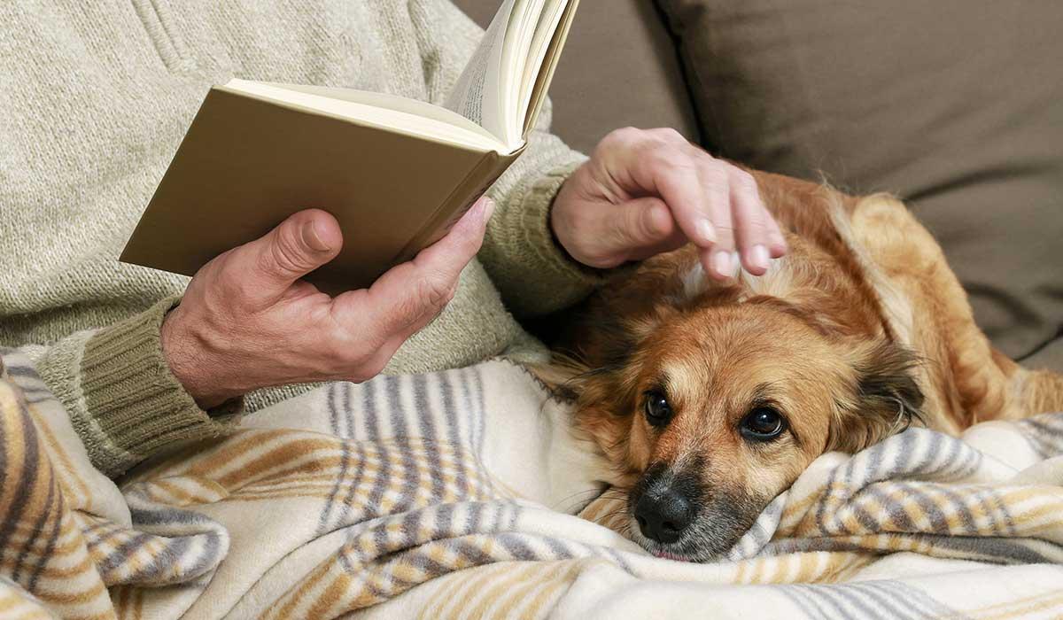 adultos mayores con animales y depresión