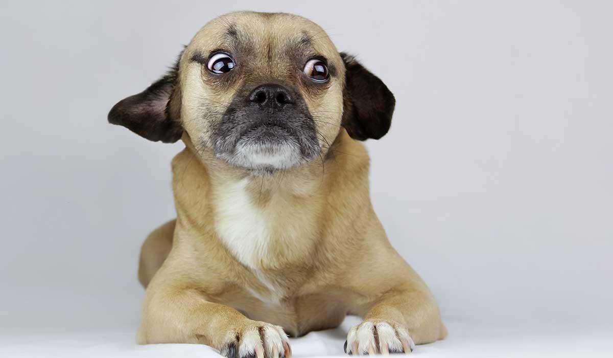 Que tu perro no te odie: Cosas que él desea que dejes de hacer