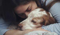 entiende el lenguaje de tu perro