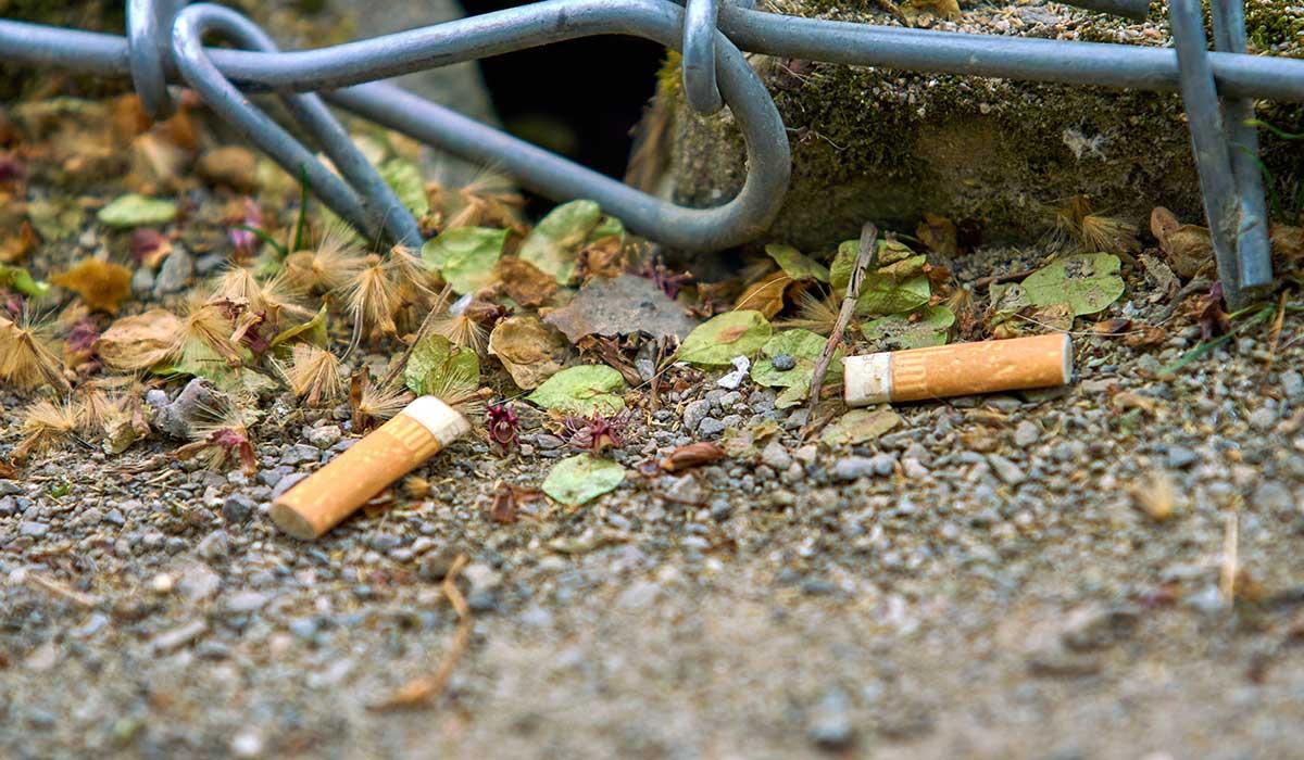 la contaminación por colillas de cigarro es muy poderosa