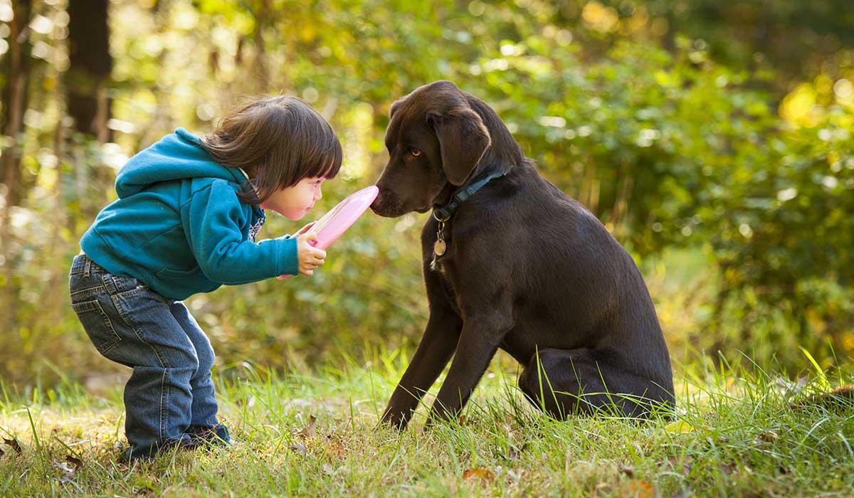 cuida a tus hijos para que los perros no los muerdan