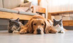 quién es mas inteligente los perros o gatos
