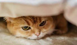 4 razones que pueden afectar el humor de tu gato