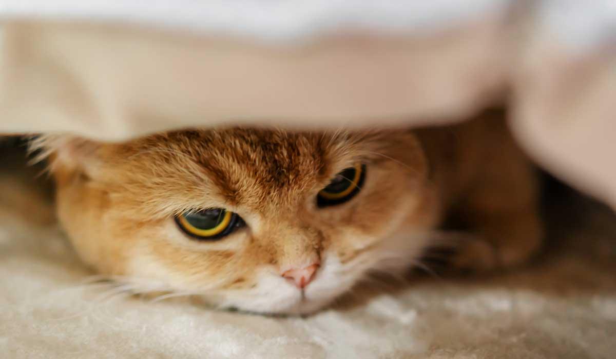 conoce por que tu gato cambia de humor