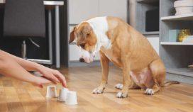 Utiliza estas 6 formas para ejercitar la inteligencia de tu perro