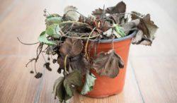trucos para revivir una planta
