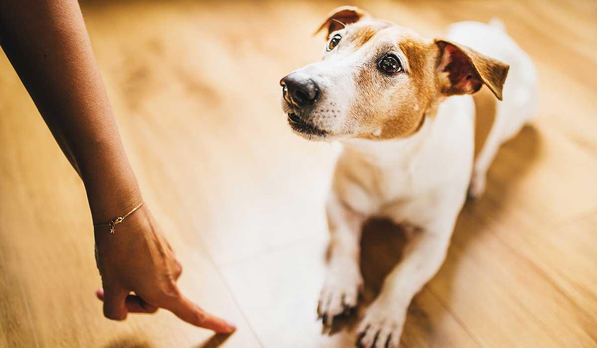 cómo controlar los malos hábitos de los perros