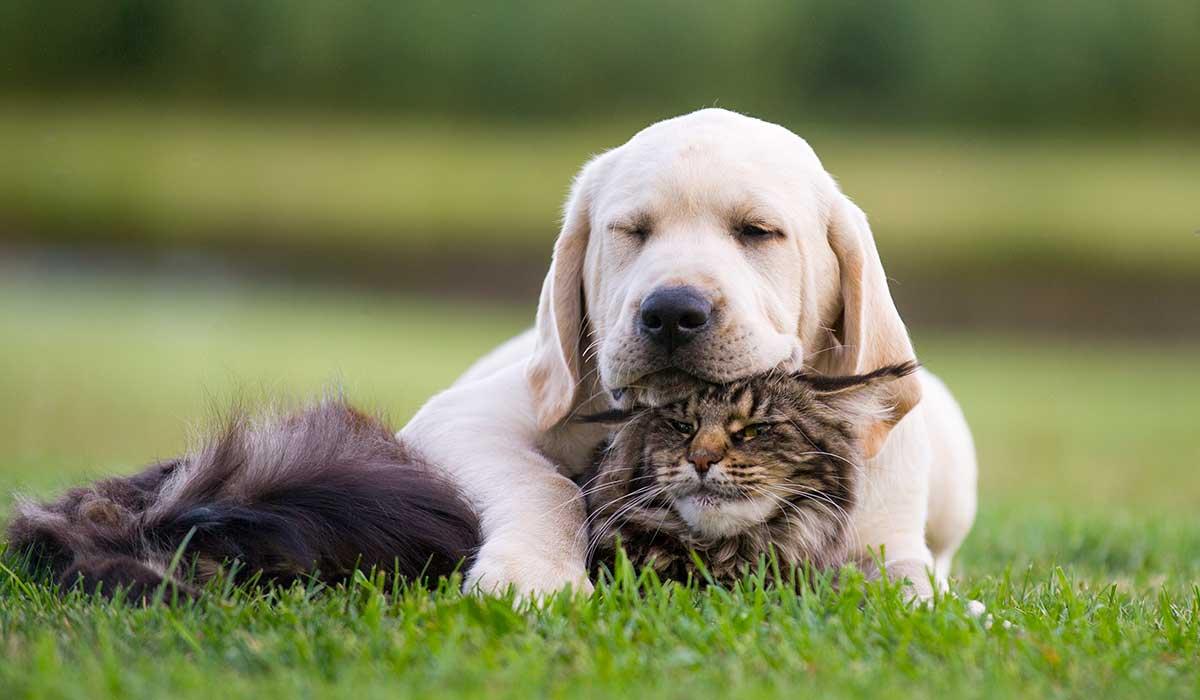 consejos para que se lleven bien perros y gatos