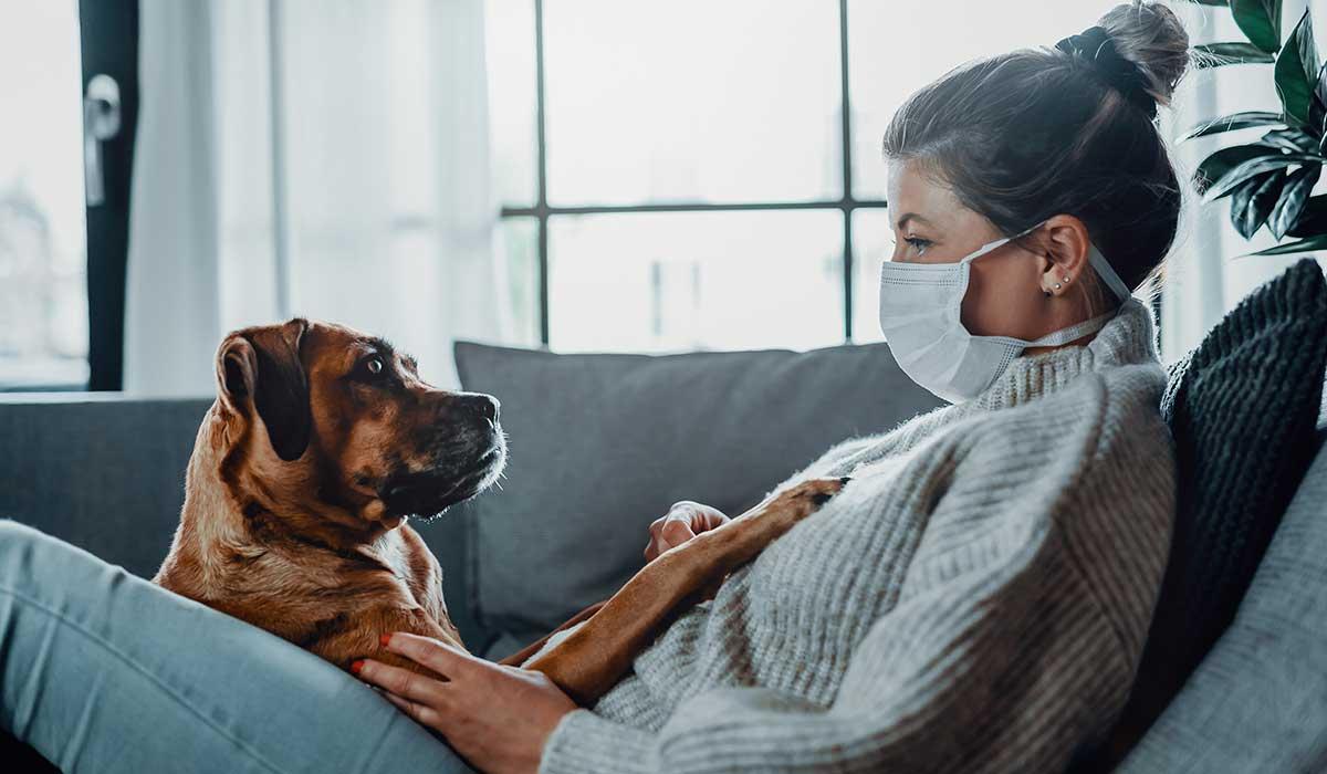 nuevo coronavirus es encontrado en perros