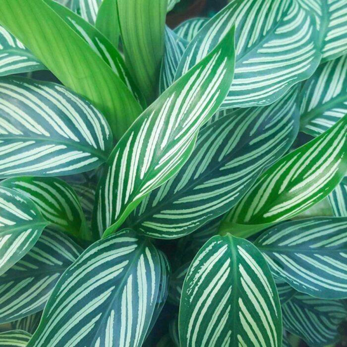 plantas difíciles de matar