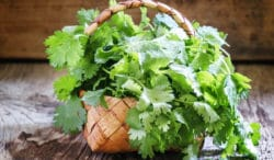 cómo preparar aderezos de cilantro