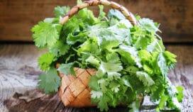 Prepara este rico aderezo de cilantro para acompañar tu comida