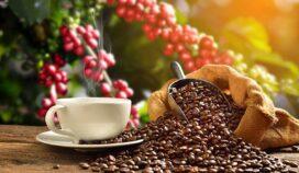 Aventúrate en la ruta veracruzana del café