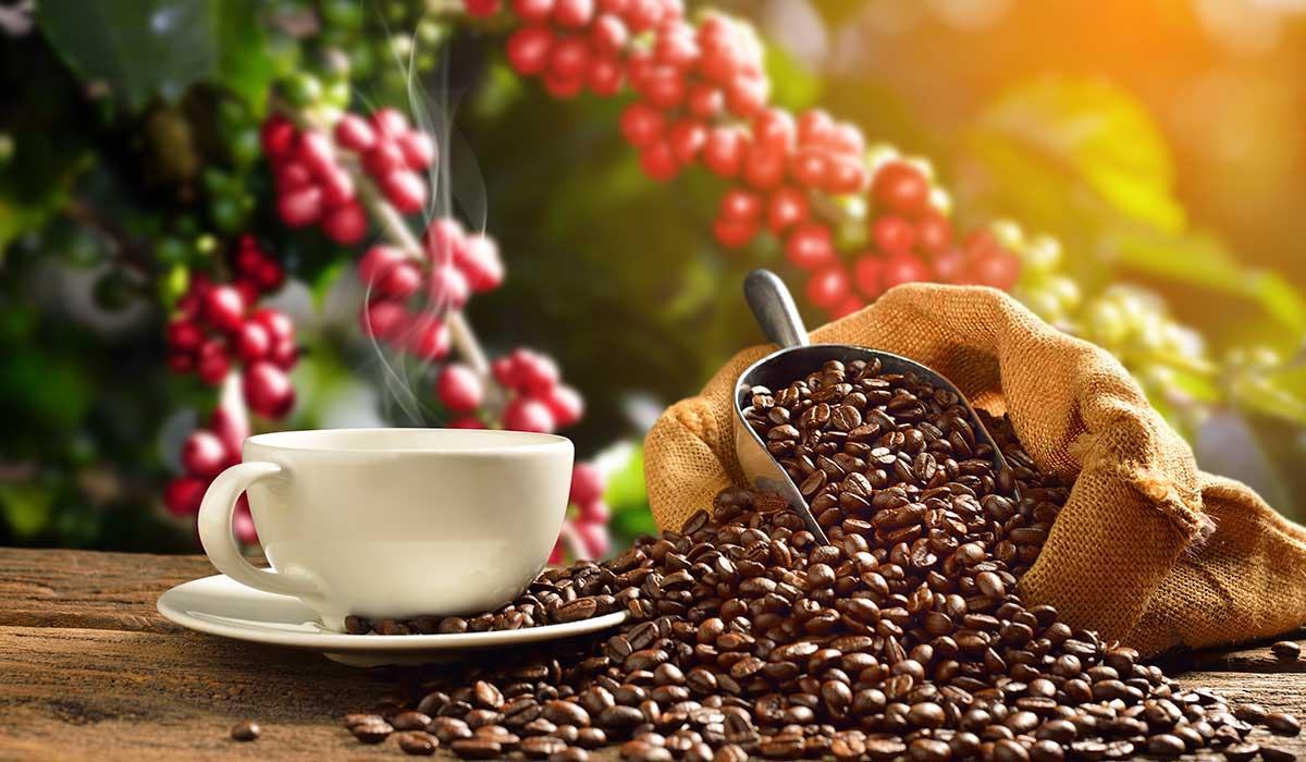 disfruta de la ruta del café en Veracruz