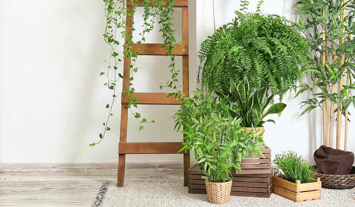 plantas que pueden ser tóxicas