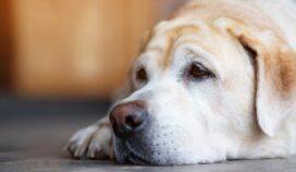 Consejos para cuidar bien a los perros ancianos