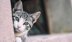 signos de que tu gato puede tener cáncer