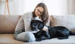 signos de que tu mascota puede estar en peligro y verse sana