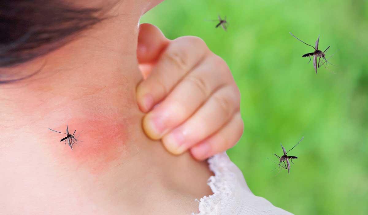 conoce por qué te pican los mosquitos