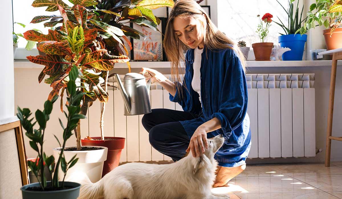 plantas que pueden intoxicar a tu perro