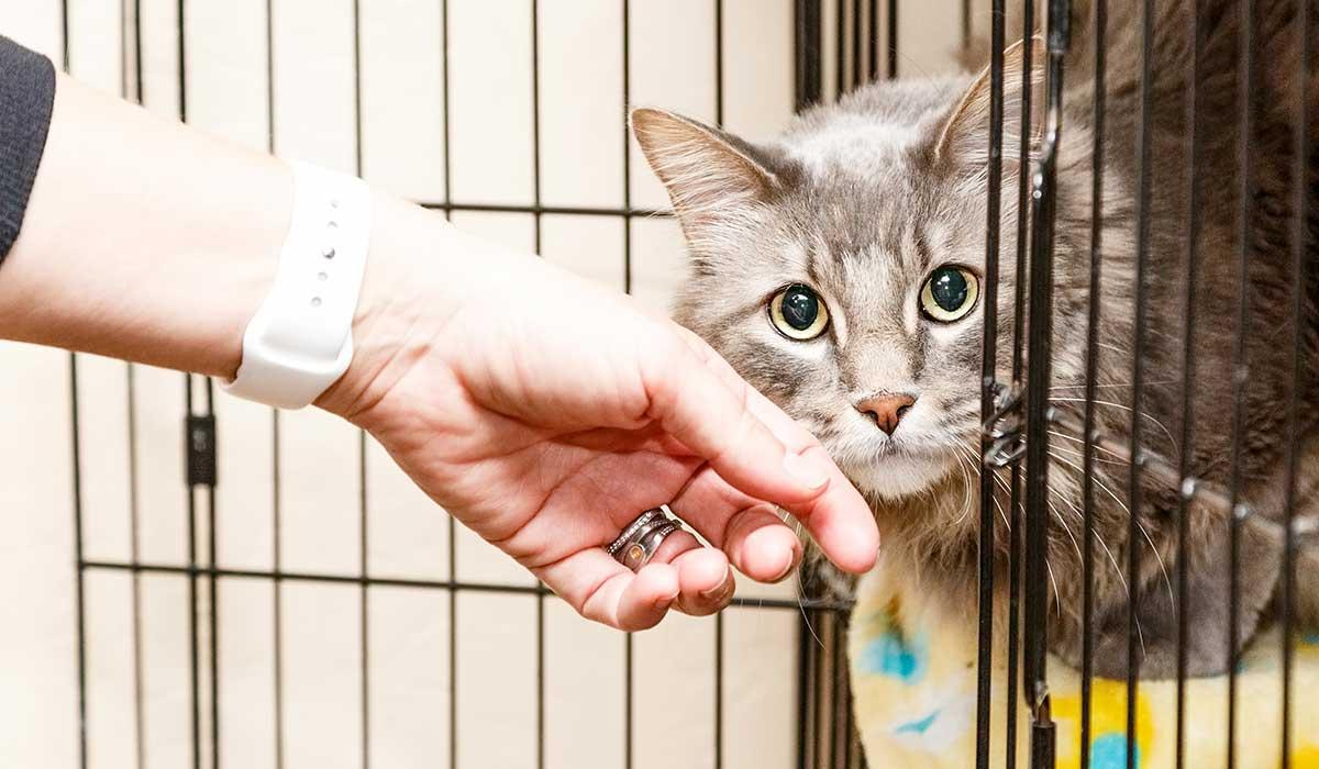 por qué tu gato tiene tanto miedo