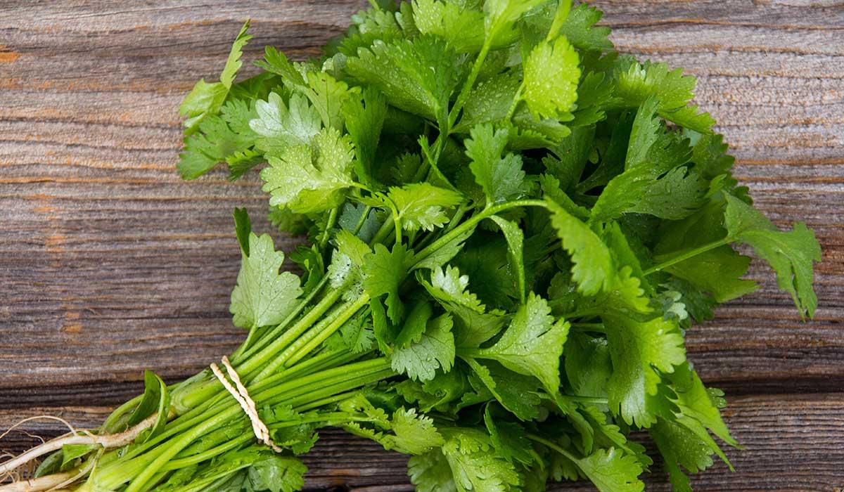 receta de espagueti al cilantro