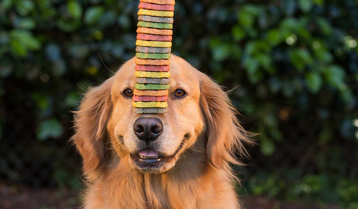 usa estas recetas para hacerle premios caseros a tus perros