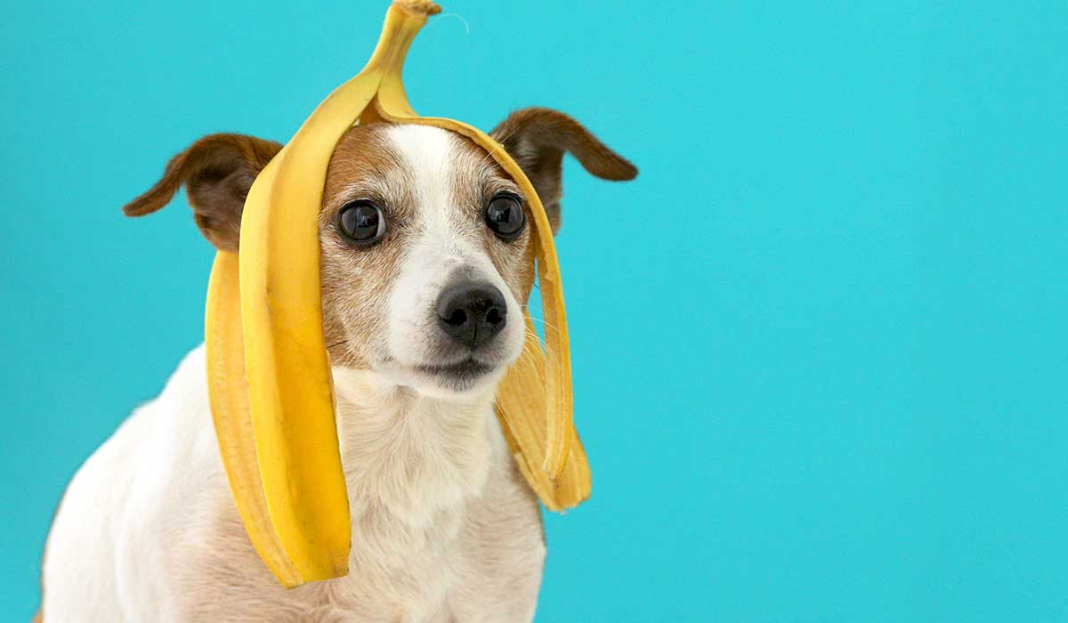 verduras y frutas que puede y no pueden comer los perros