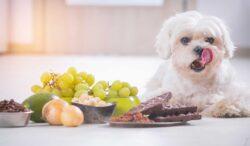 estosd alimentos son tóxicos para los perros