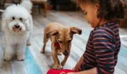 estos son los increibles beneficios que obtienes con una mascota