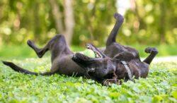 explicación de por que un perro pueden comportarse extrañamente
