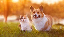 Esto es lo que realmente significan los años de perros y gatos