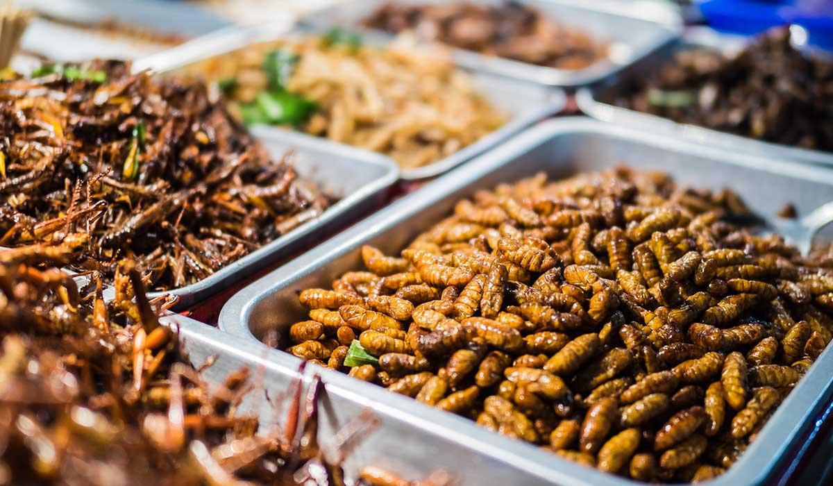 los insectos forman parte de los platillos mexicanos