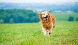 que cantidad de ejercicio tiene que hacer tu perro