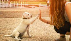 evita estos errores al entrenar a tu perro