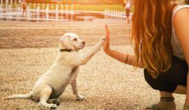6 errores en el adiestramiento de tu perro que lamentarás