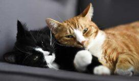 Hechos y datos sobre los gatos que son realmente fascinantes