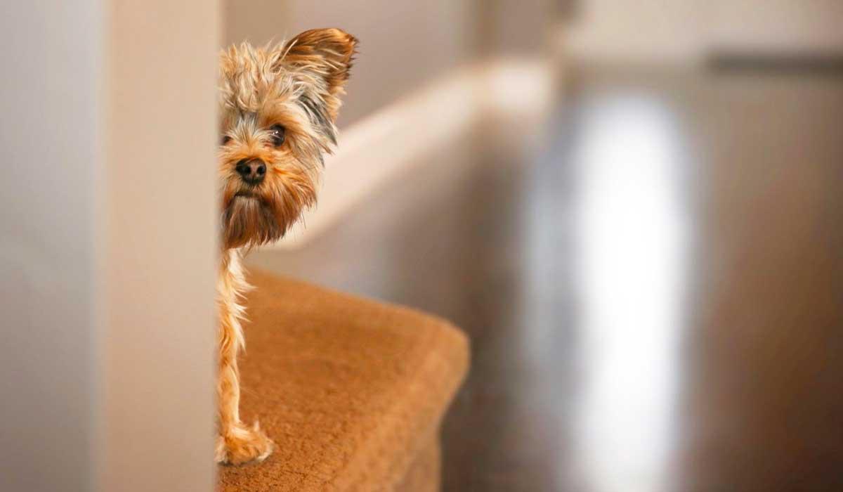 formas de tratar la ansiedad en los perros