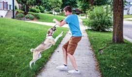 Cómo resolver problemas de comportamiento comunes de las mascotas